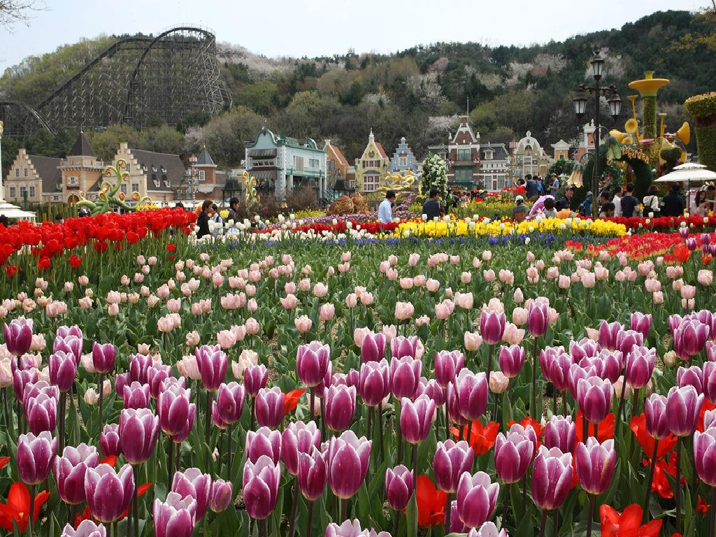 Yongin Everland (爱宝乐园)