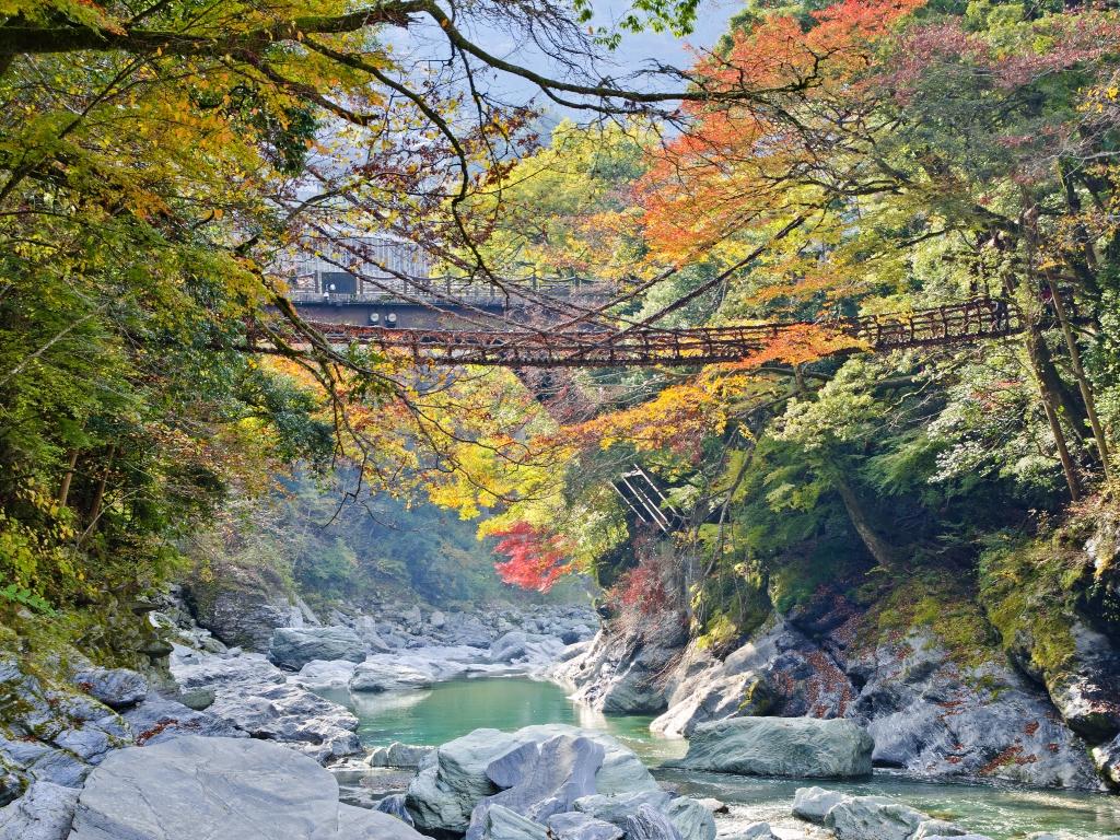 Kazurabashi bridge (Autumn) / 葛藤桥(秋)