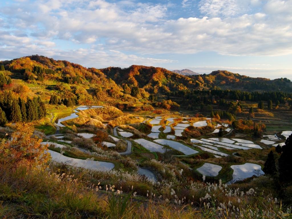 Hoshitoge Terraced Rice Paddy Fields / 星峠梯田