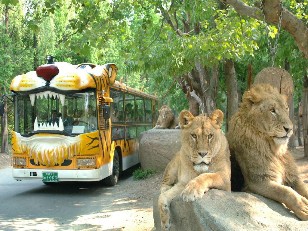 Yongin Everland - Safari World (爱宝乐园 - 动物王国)