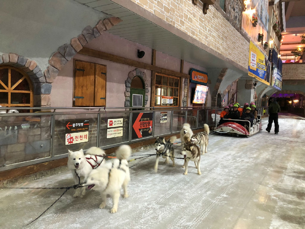 One Mount Snow Park - Dog Sled (冰雪乐园 - 室内冰橇)