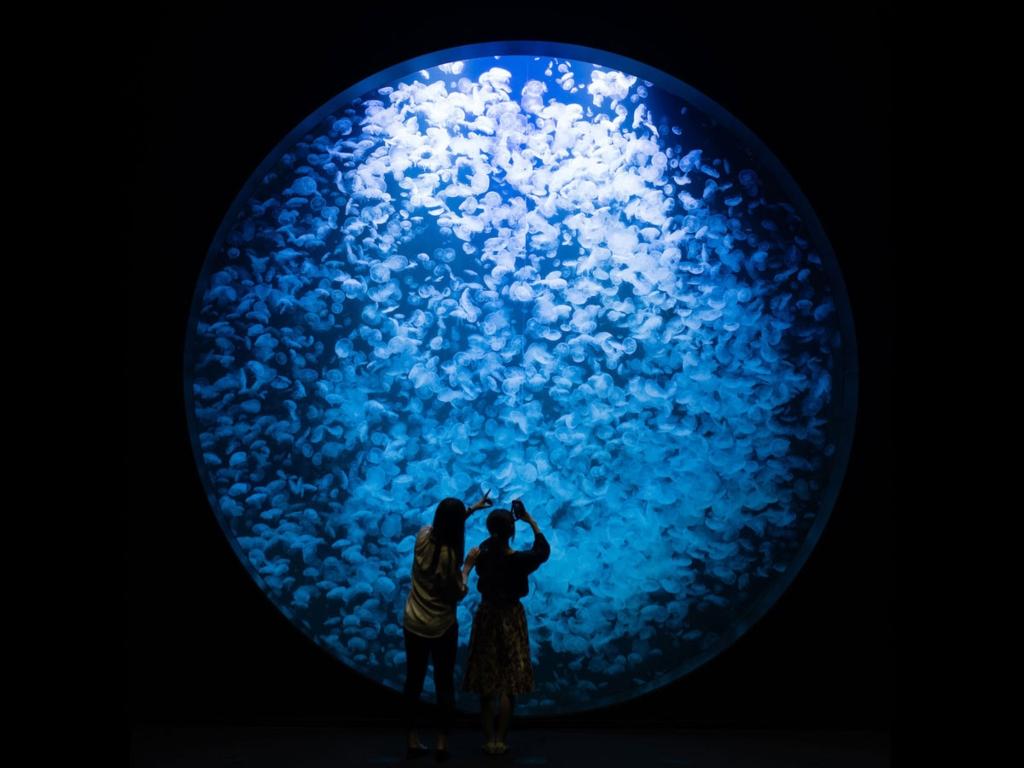 Kamo Aquarium / 加茂水族馆