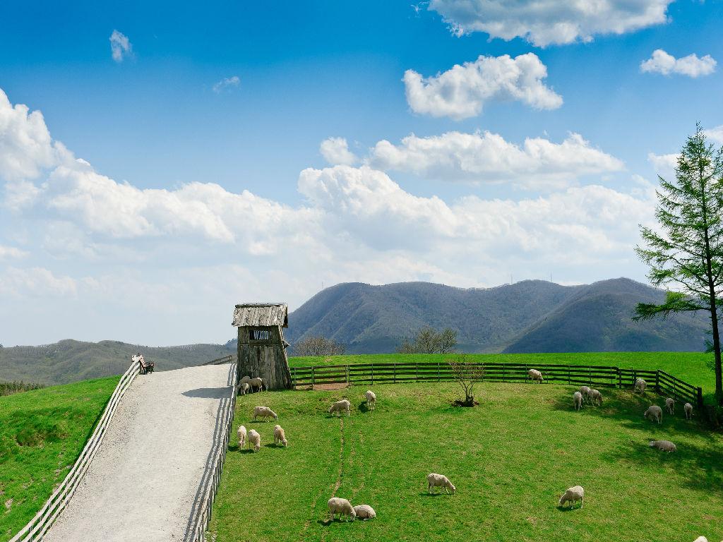 Daegwallyeong Sheep Ranch (大关岭牧场)