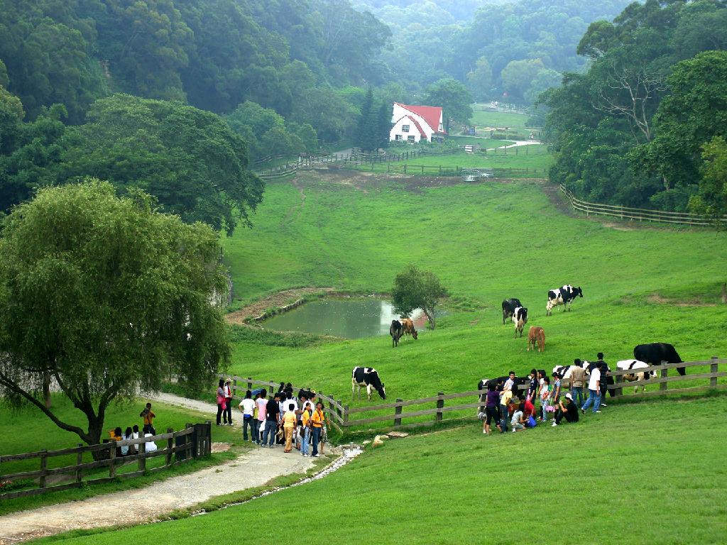 Miaoli Flying Cow Ranch (苗栗飞牛牧场 - 经典画面)