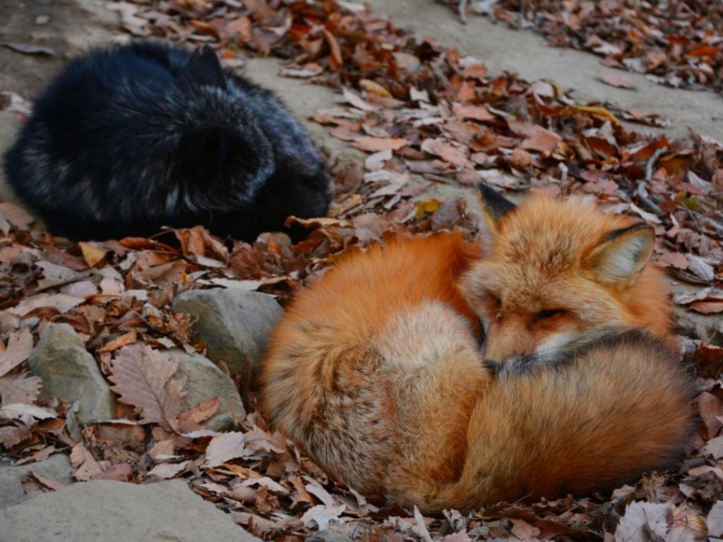 Fox Farm / 狐狸农场