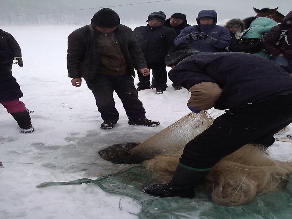 Traditional Fishing in Winter冬捕
