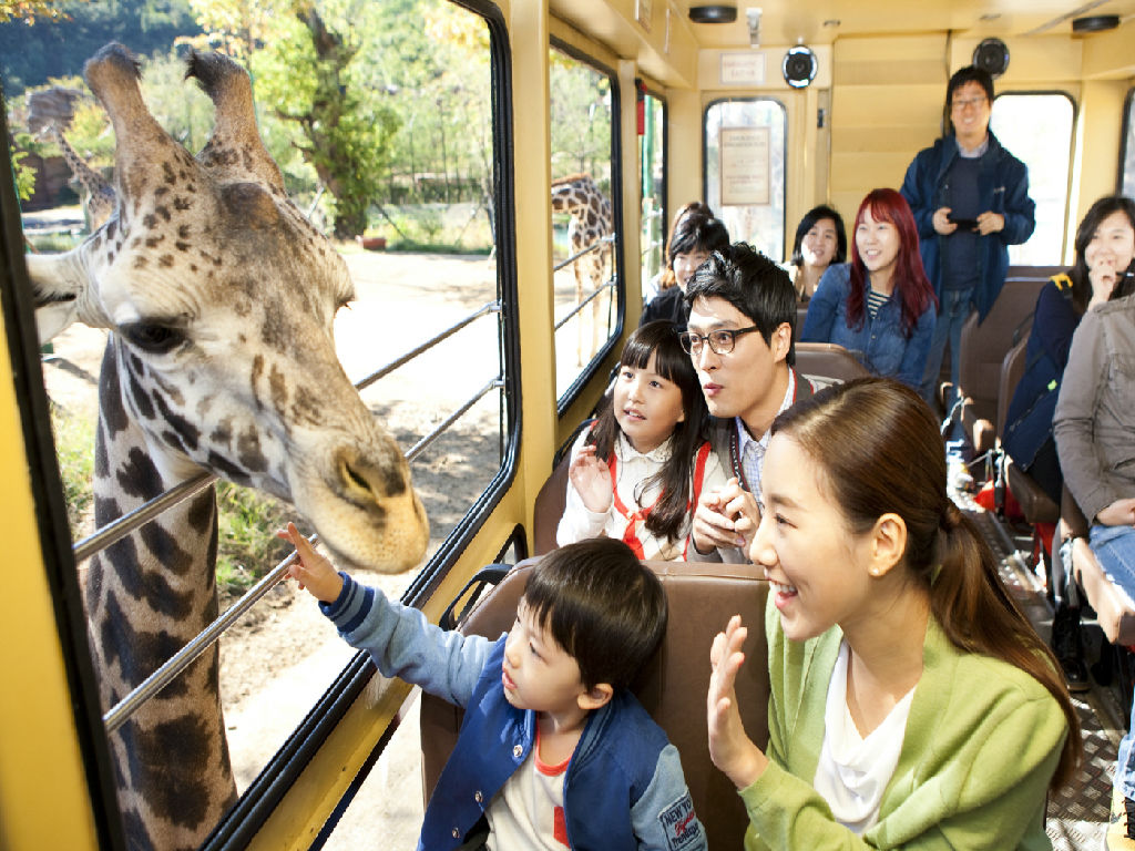 Yongjin Everland - Safari World (爱宝乐园 - 动物王国)