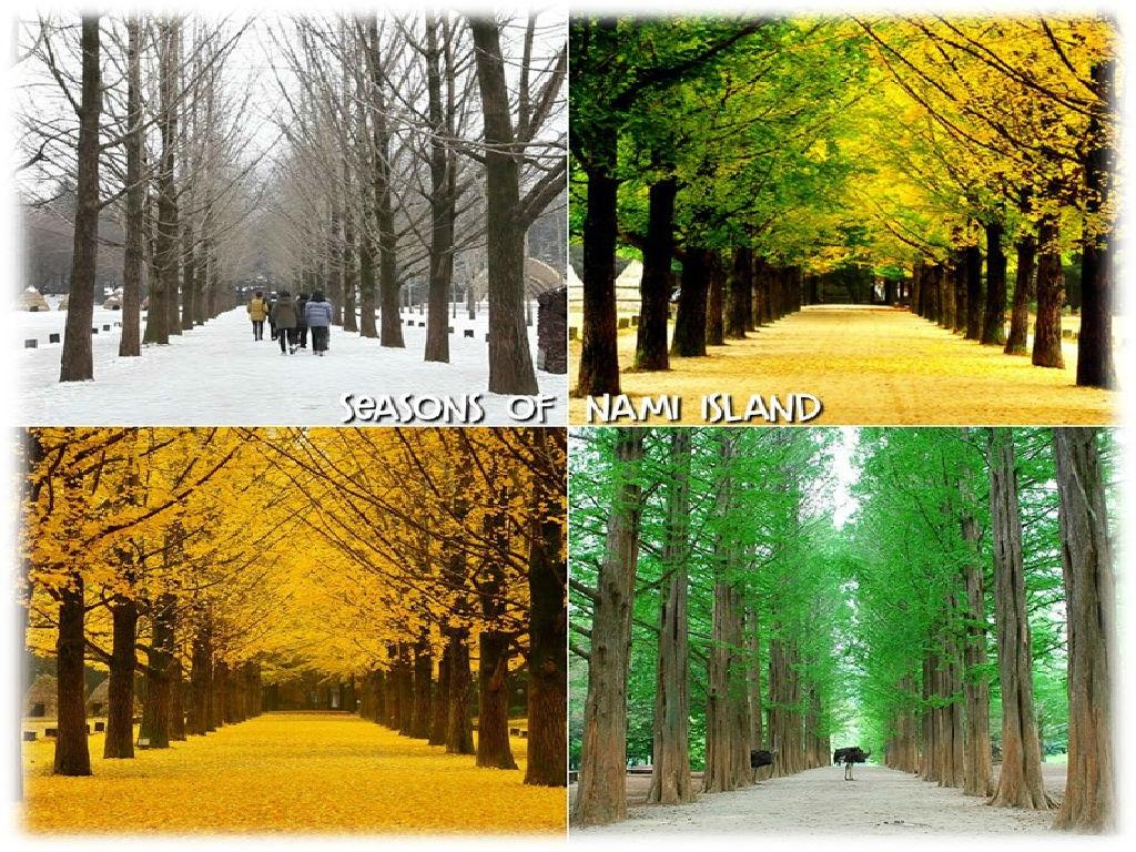 6D4N LOVELY KOREA